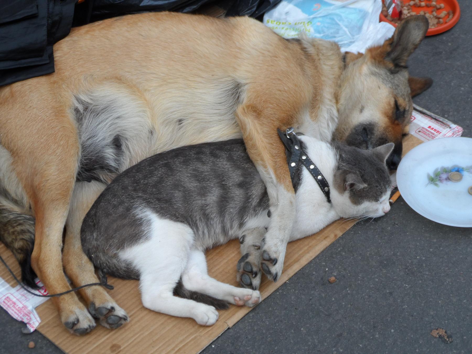 Chien et chat enlacés